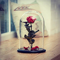 Роза в стеклянной колбе Красный рубин.