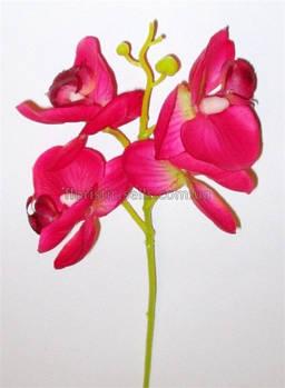 Ветка красной орхидеи