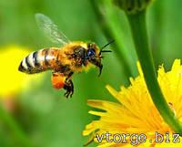 Продукты пчеловодства:маточное молочко, гемогенат, настойка пчелиный помор, прополис, мед, перга, пыльца