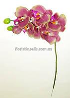 Орхидея  60 см, сиренево-оливковая