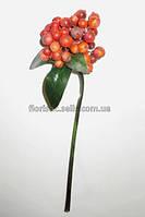 Ветка ягод облепихи