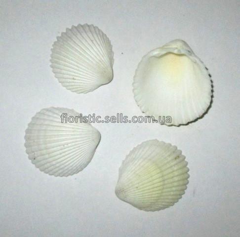Ракушки Орел 4 шт., 2,5-3,5 см