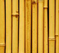 Палочки бамбука