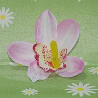 Головка орхидея дендробиум