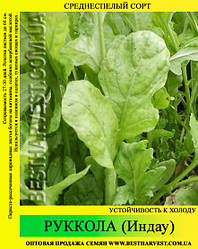 Семена салата «Руккола» (Индау) 0.5 кг