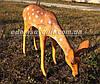 Садовая фигура Косуля пасущаяся, фото 6