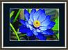 """Набор картина стразами Crystal Art КС-1019 """"Синий лотос"""""""