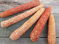 Качаны кукурузы очищенной, 5 шт., 10-18 см., 20 гр.
