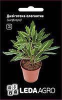 Семена Дизиготека (шеффлера) Элегантная  5 семян  Hem Zaden