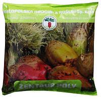 Семена Свекла кормовая Центаур Поли, Польша / 1 кг