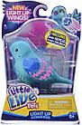 Интерактивная поющая птичка Little Live Pets Season 8 Bird Single Pack - Shelly Shimmer, фото 5