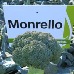 Семена Монрелло F1 — среднеспелая капуста брокколи, 2500 семян