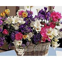 Картина по номерам Любимые цветы VP1038 Babylon Turbo