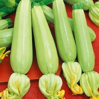 Семена кабачка Каризма F1 (Syngenta, САДЫБА ЦЕНТР), 5 семян — ранний гибрид (40 дней), светлый