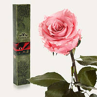Долгосвежая роза Розовый Кварц 7 карат (средний стебель), Долгосвежая троянда Рожевий Кварц 7 карат (середній стебло), Долгосвежие розы