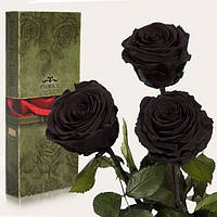 Три долгосвежих розы Черный Бриллиант 7 карат (средний стебель), Три долгосвежих троянди Чорний Діамант 7 карат (середній стебло), Долгосвежие розы