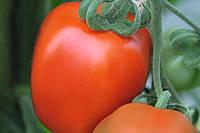 Семена томата Бенито F1, Bejo 5 грамм   профессиональные, фото 1
