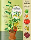 Усе починається з насіння… як росте їжа. Книга Емілі Боун, фото 3