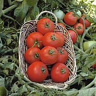 Семена томата Полбиг F1, Bejo 5 грамм | профессиональные, фото 1