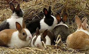 Обладнання для кроликів і нутрій