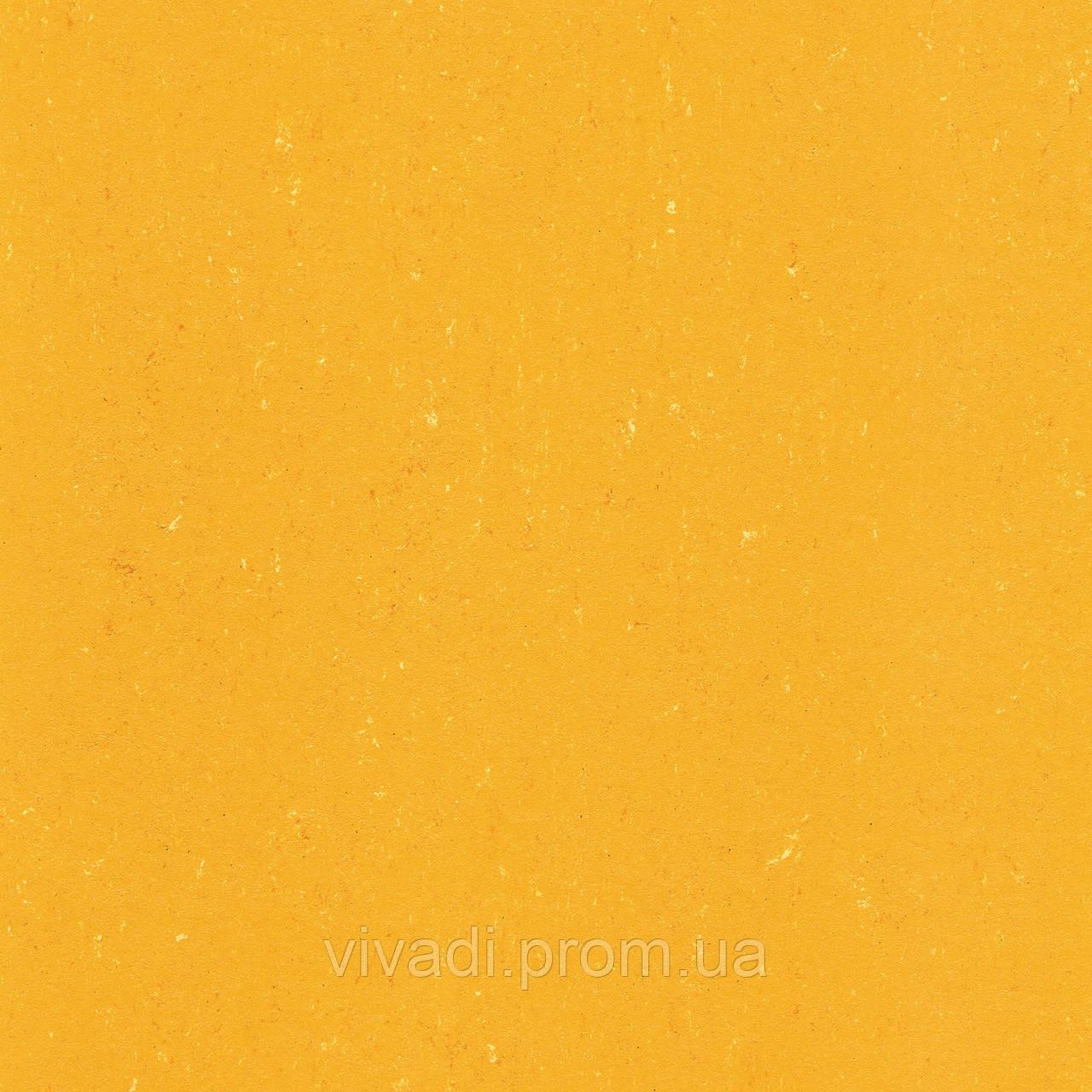 Натуральний лінолеум Colorette PUR - колір 137-171