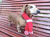 Шарф для собаки или кота декоративный, фото 5