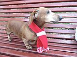 Шарф для собаки или кота декоративный, фото 7