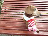 Шарф для собаки або кота декоративний, фото 7