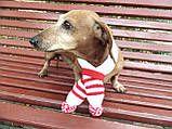 Шарф для собаки або кота декоративний, фото 5