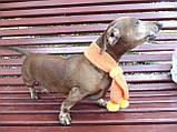 Шарф для собаки или кота декоративный, фото 8