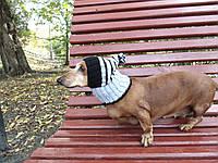 Шапка для собаки вязанная универсальная