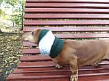 Шапка для собаки вязанная универсальная, фото 6