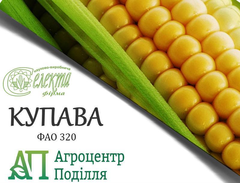 Семена кукурузы КУПАВА ФАО 320