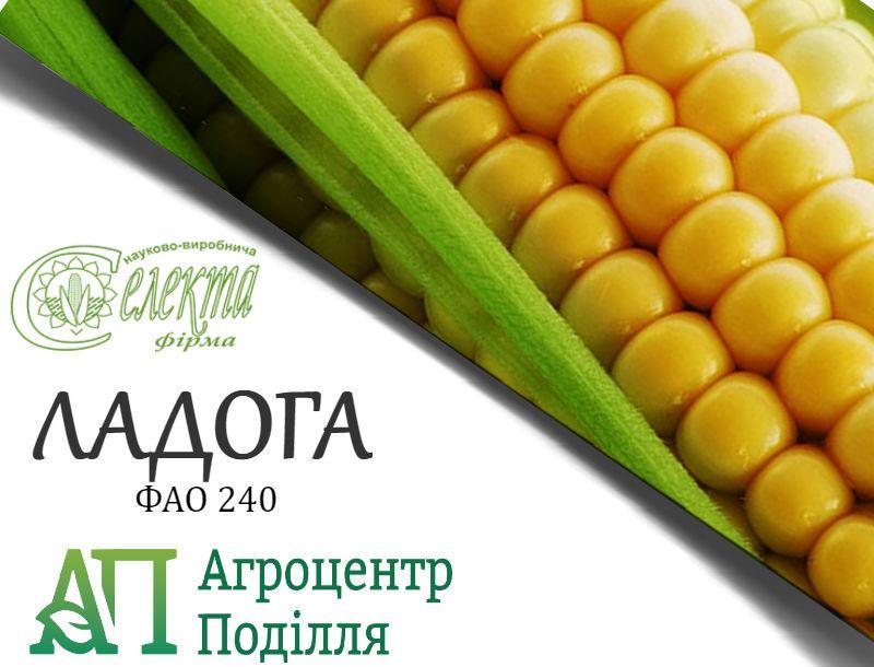 Семена кукурузы ЛАДОГА ФАО 240