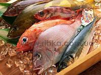 Рыба свежемороженая: Горбуша, Масляная, Филе хека, Саворин, Форель, Кета, Кинг Клип, Бротола, Нототения