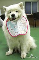 Эксклюзивный нагрудник для собаки Vintage Blue, фото 1