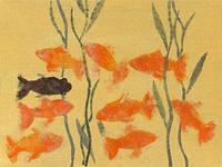 8 золотых рыбок и 1 черная