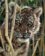 Картина по номерам Menglei КН1001 Тигренок 40 х 50 см, фото 1