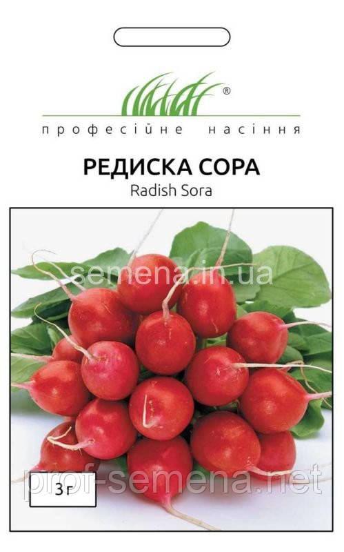 Редиска Сора 3 г.