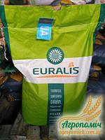 Семена подсолнечника ЕС Белла