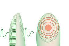 Электрическая щетка для очистки лица ABOEL ABB620 массажер для лица 2 в 1 Зеленый, фото 3