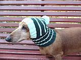 Шапка для собаки,шапка для маленької собачки,шапка для такси,зимова шапка, фото 6