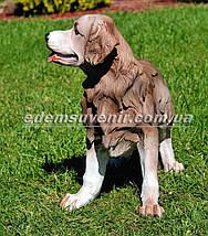 Садовая фигура собака Ретривер, фото 2
