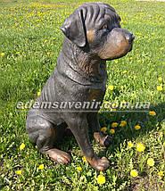 Садовая фигура собака Ротвейлер, фото 3