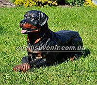Садовая фигура собака Ротвейлер лежачий, фото 1