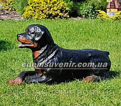 Садовая фигура собака Ротвейлер лежачий, фото 2