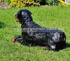 Садовая фигура собака Ротвейлер лежачий, фото 3
