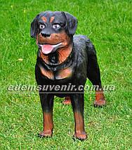 Садовая фигура собака Ротвейлер стоячий, фото 2