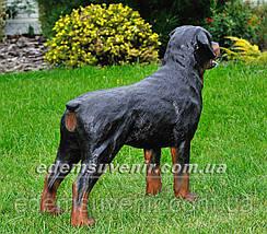 Садовая фигура собака Ротвейлер стоячий, фото 3