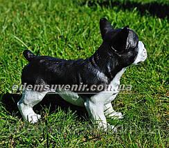 Садовая фигура собака Французский бульдог стоячий, фото 3